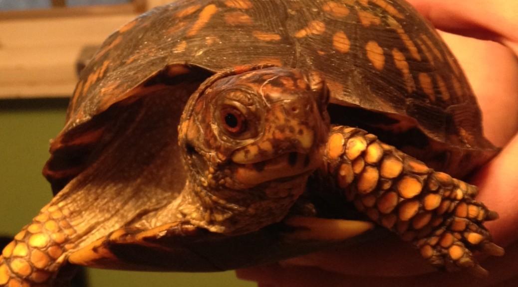 Reptile and Amphibian Rehabilitation Seminar