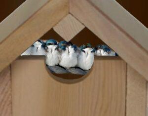 BirdHose