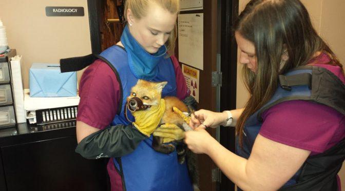 Train to Become a Wildlife Rehabilitator Online