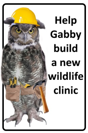 Contact & Hours | Red Creek Wildlife Center